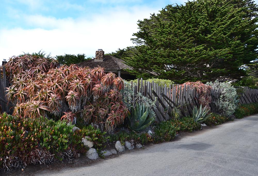 palissadesign-cloture et plantes succulentes