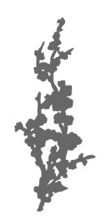 treillis prunus liana 2D