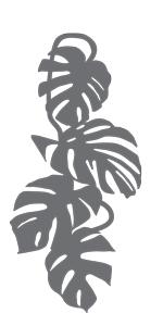 brise-vue et treillis monstera liana 1D