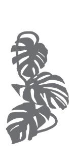 brise-vue et treillis monstera liana 2D