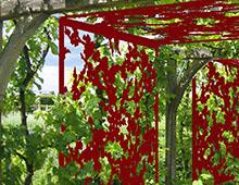 Les couleurs au jardin